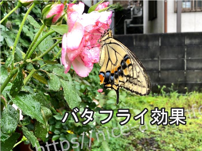 美しい蝶の羽ばたきで変わるバタフライ効果に似てるかも